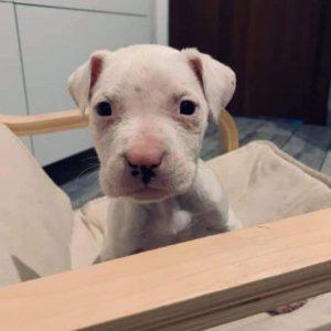 cucciolo donazioni